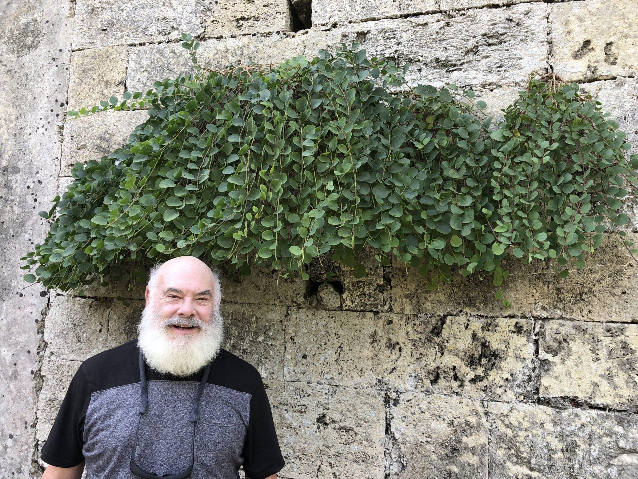 25 AW caper plant stone wall syracuse siscily_20181012_4195