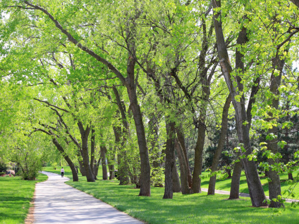 Green Spaces Does Your Heart Good | Weekly Bulletins | Andrew Weil M.D.