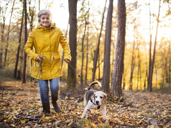 Downside Of Dog Walking   Weekly Bulletins   Andrew Weil, M.D.