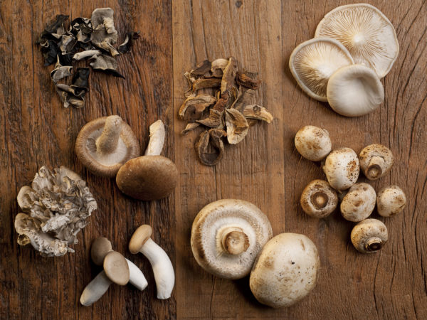 Mushrooms For Memory |Weekly Bulletins | Andrew Weil, M.D.
