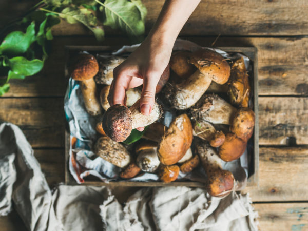 Reheating Mushrooms? | Food Safety | Andrew Weil, M.D.