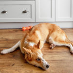 CBD Products For Pets? | Pets & Pet Care | Andrew Weil, M.D.