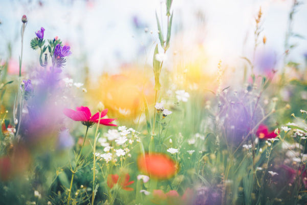 The Legacies of Spring | Spontaneous Happiness | Andrew Weil, M.D.