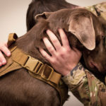 Emotional Support Pets | Pets & Pet Care | Andrew Weil, M.D.