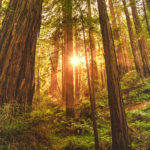 How Much Time In Nature?   Healthy Living   Andrew Weil, M.D.