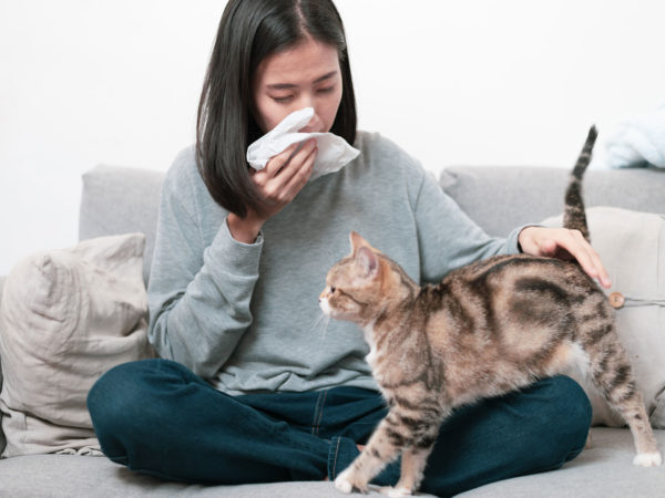 Allergic To Cats? | Weekly Bulletins | Andrew Weil, M.D.
