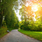 Trees Soothe The Spirit And Benefit Health | Weekly Bulletins | Andrew Weil, M.D.