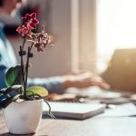 Plants To Counter Stress At Work | Weekly Bulletins | Andrew Weil, M.D.