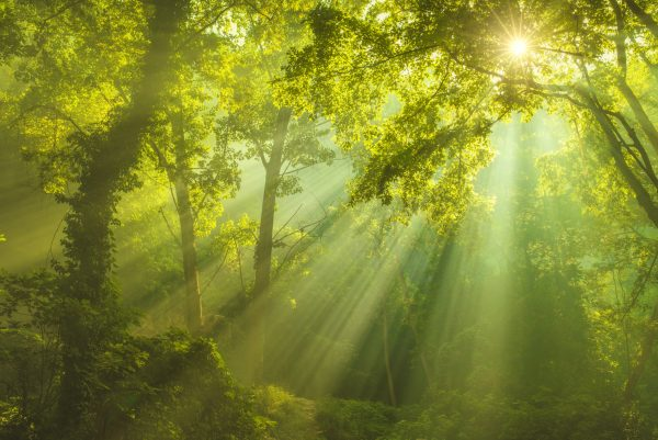 The Lofty Legacy Of Trees   Spontaneous Happiness   Andrew Weil, M.D.