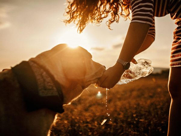 Summer Can Make Your Dog Sick | Weekly Bulletins | Andrew Weil, M.D.