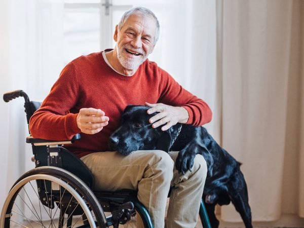 Dogs To Diagnose COVID-19 | Weekly Bulletins | Andrew Weil, M.D.