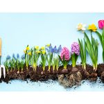 Legacy For The Celebrations Of The Spring Season | Spontaneous Happiness | Andrew Weil, M.D.